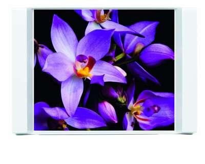Поднос Subtraktion Orchids Emsa (EM509411)